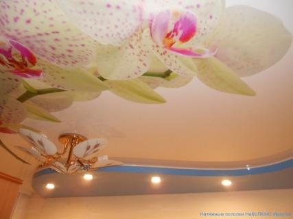 Орхидея на потолке